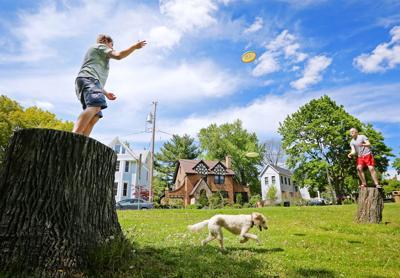 Hudson Park dog