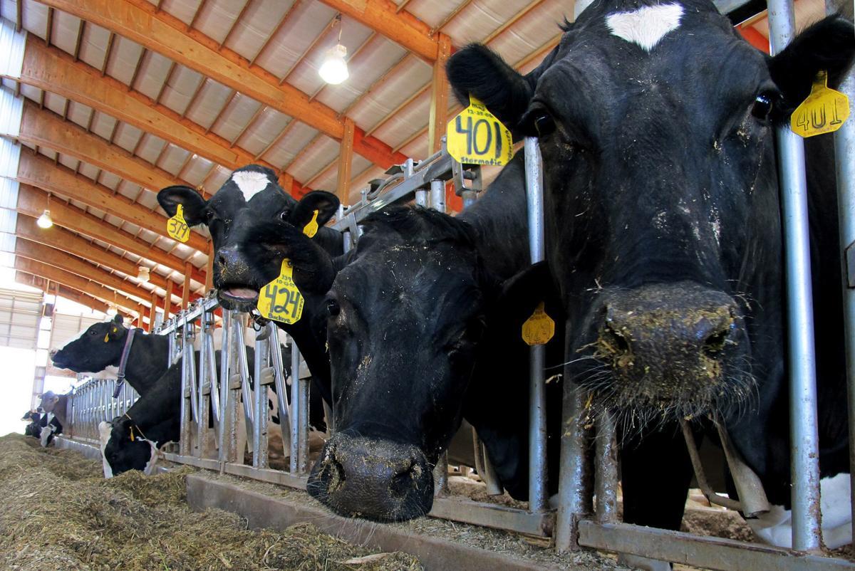 Dairy tariffs