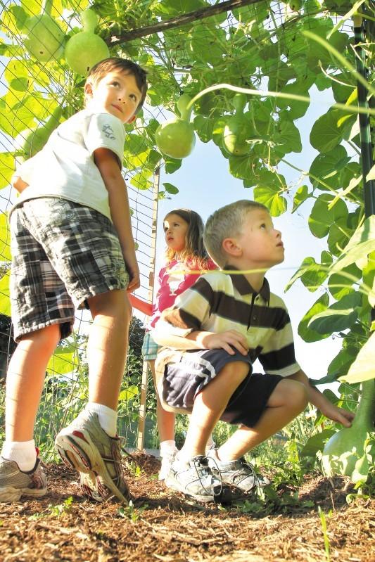 School garden, under gourds