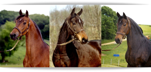 horses.png