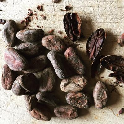 Singing Rooster cacao beans