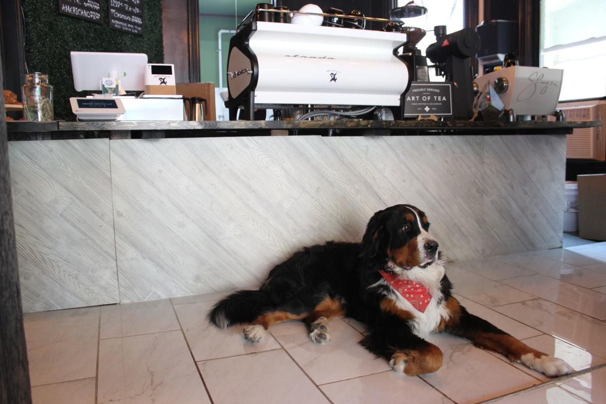Pablo, the 2-year-old Bernese mountain dog and trained service dog.JPG