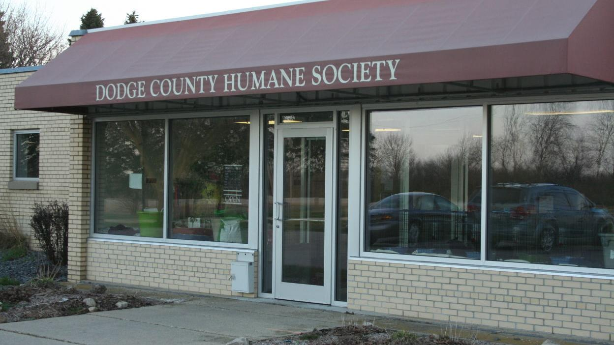 Humane Society Brings In 15 Stray Dogs From Texas Shelter Local