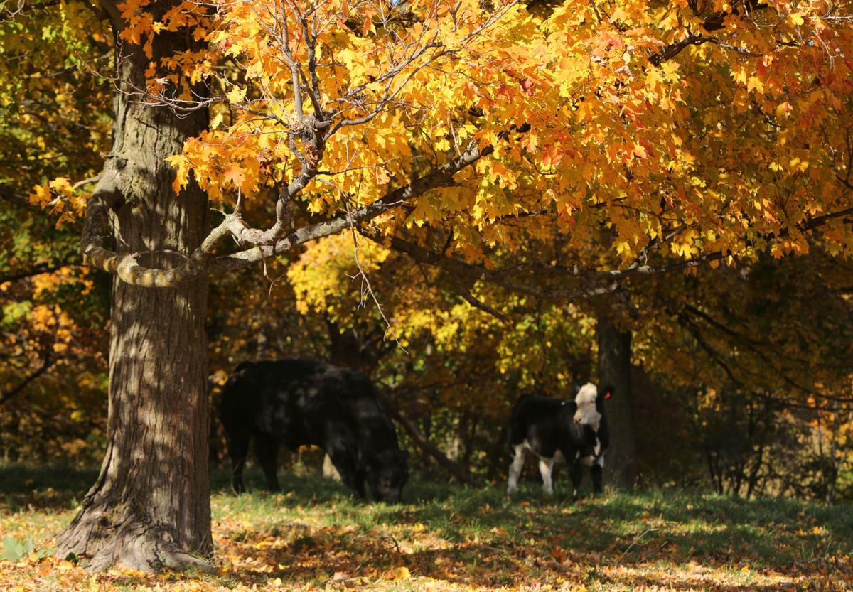 Autumn Colors In Vilas Park Lagoon >> Photos One Last Gasp Of Fall Colors Local News Madison Com