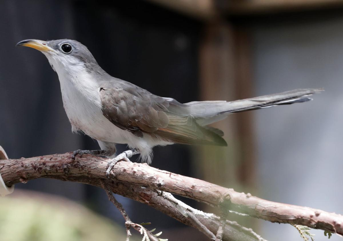Rehabbed bird