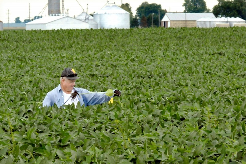 soybeans file photo