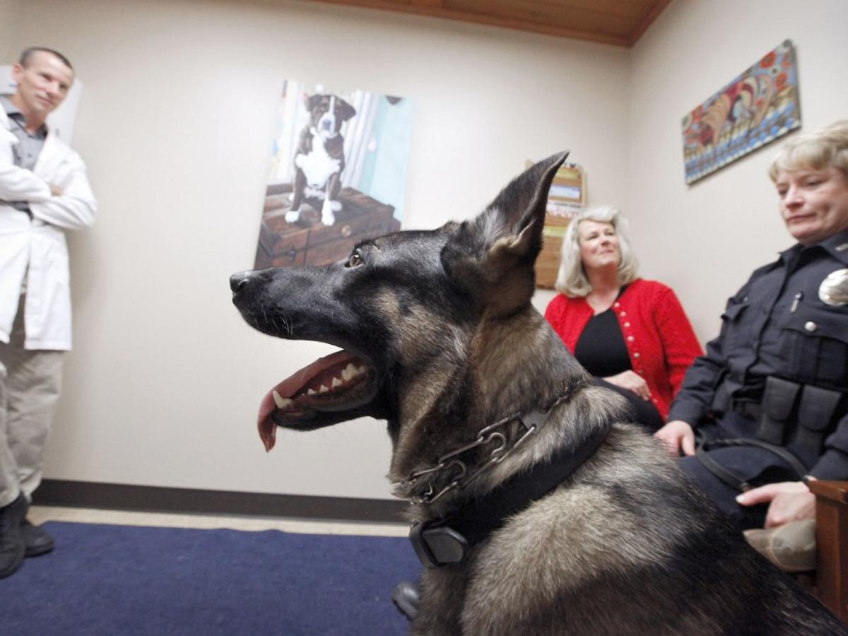 New Program Provides Free Veterinary Care For Madison Police Dogs