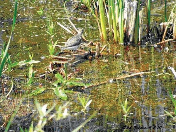 Wetlands (copy)
