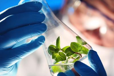 Scientist holding beaker with plants (copy)