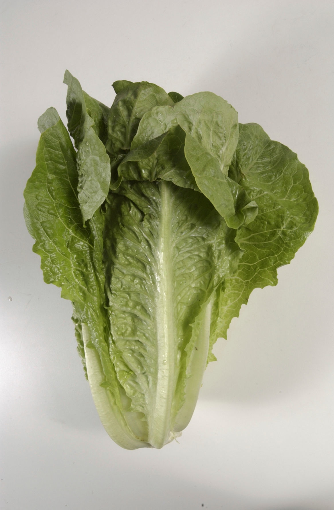 Lettuce Outbreak