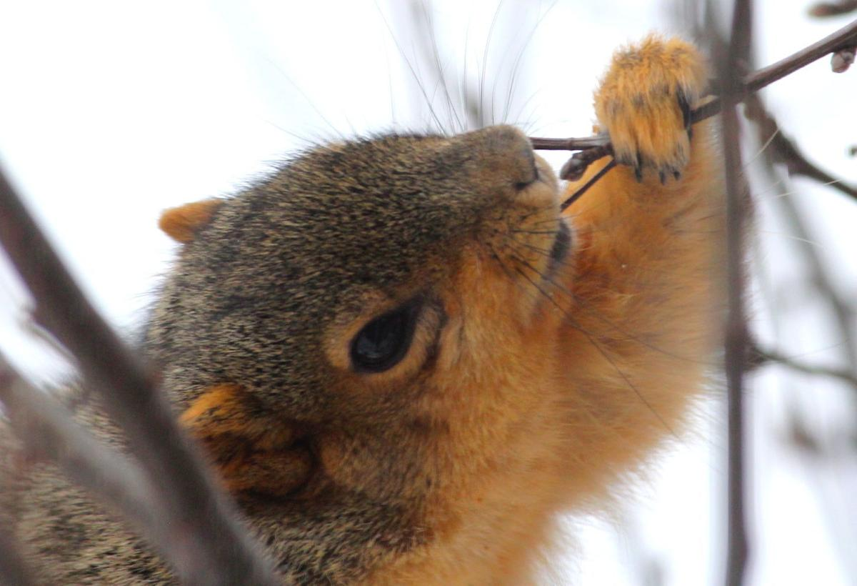 Jerry Davis: Oregon man savors late season squirrel hunt