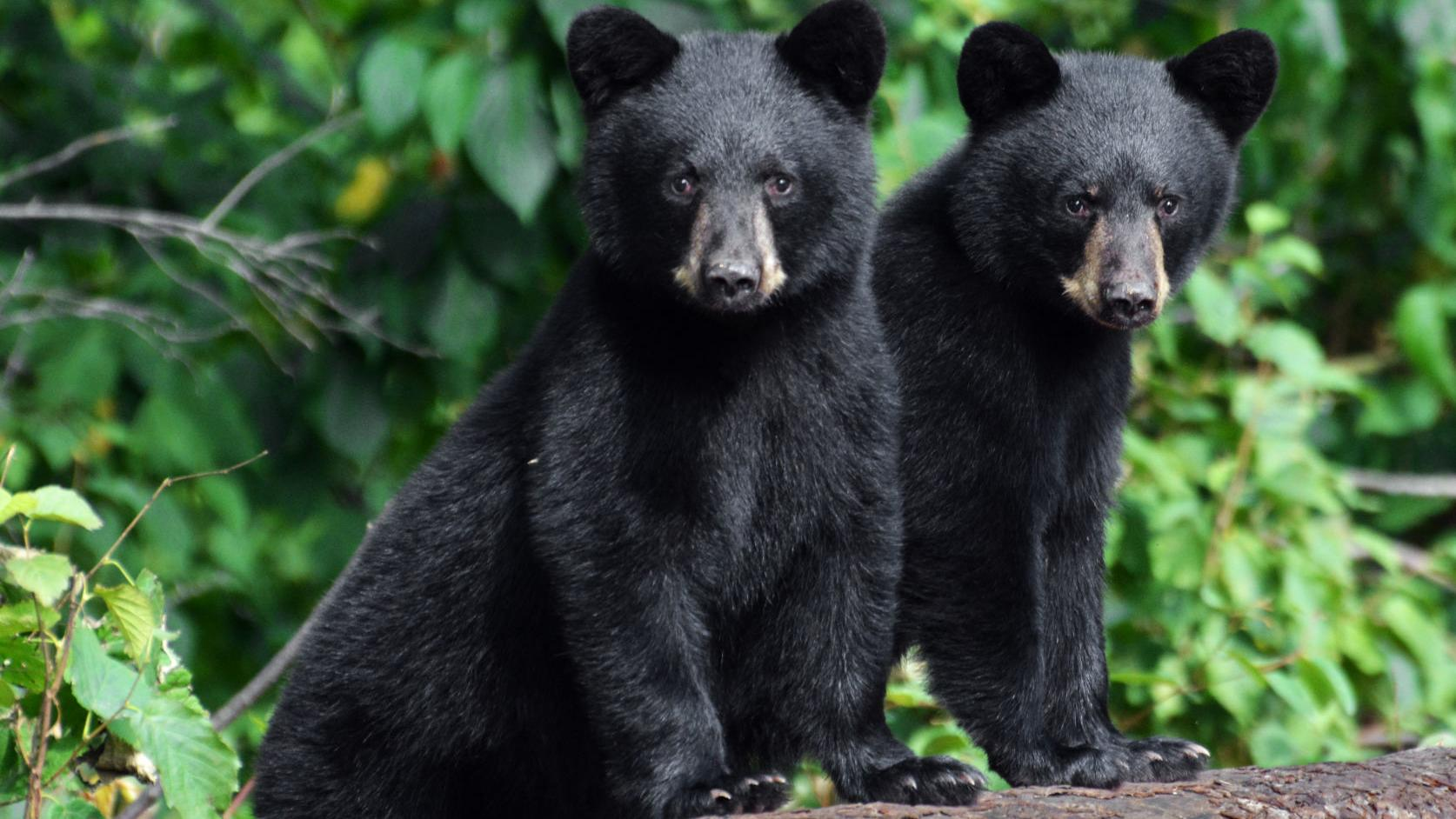 Patricia Randolph's Madravenspeak: Taking a stand for bear personhood