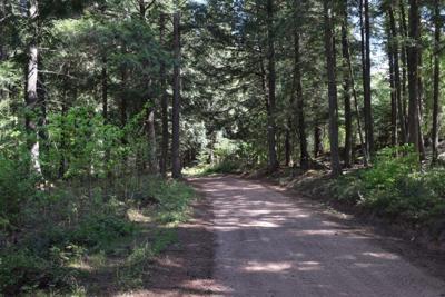 Lynne County