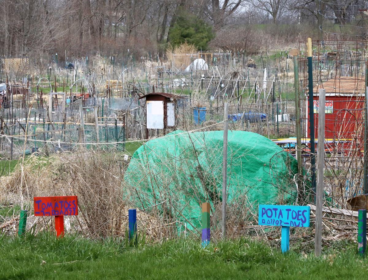 Community Gardens plots