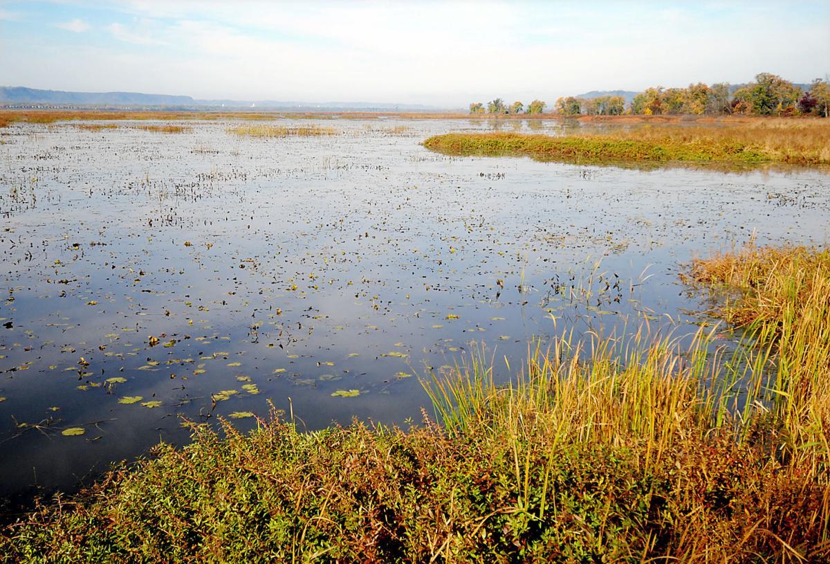 Trempealeau Wetlands (copy) (copy)