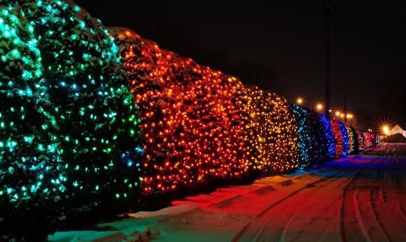 University Avenue Tree Lights Are >> Vandal Cuts Down Tree In University Avenue Holiday Light Display