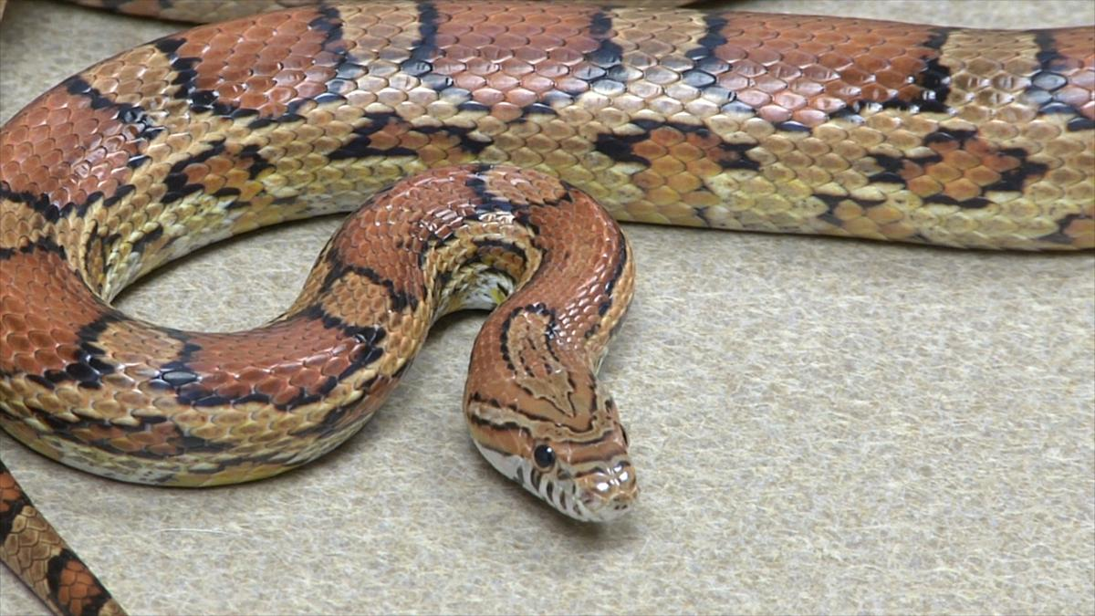 Blue Sky Science: How many species of snakes are there? | Blue Sky ...
