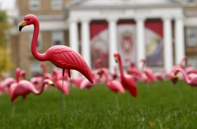 The Pink Flamingo Star Of One Of Madison S Greatest Pranks Loses