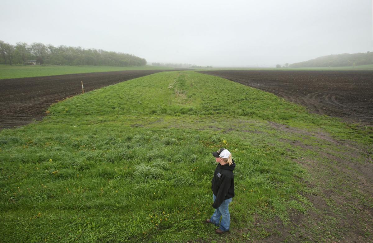 Runoff control crop
