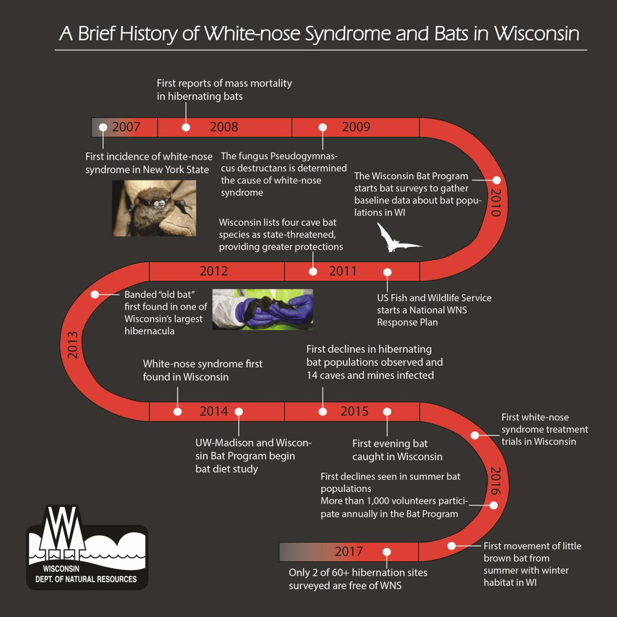 White-nose syndrome timeline