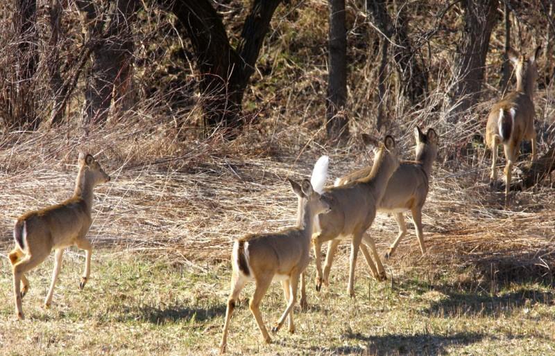 Deer file photo, several deer