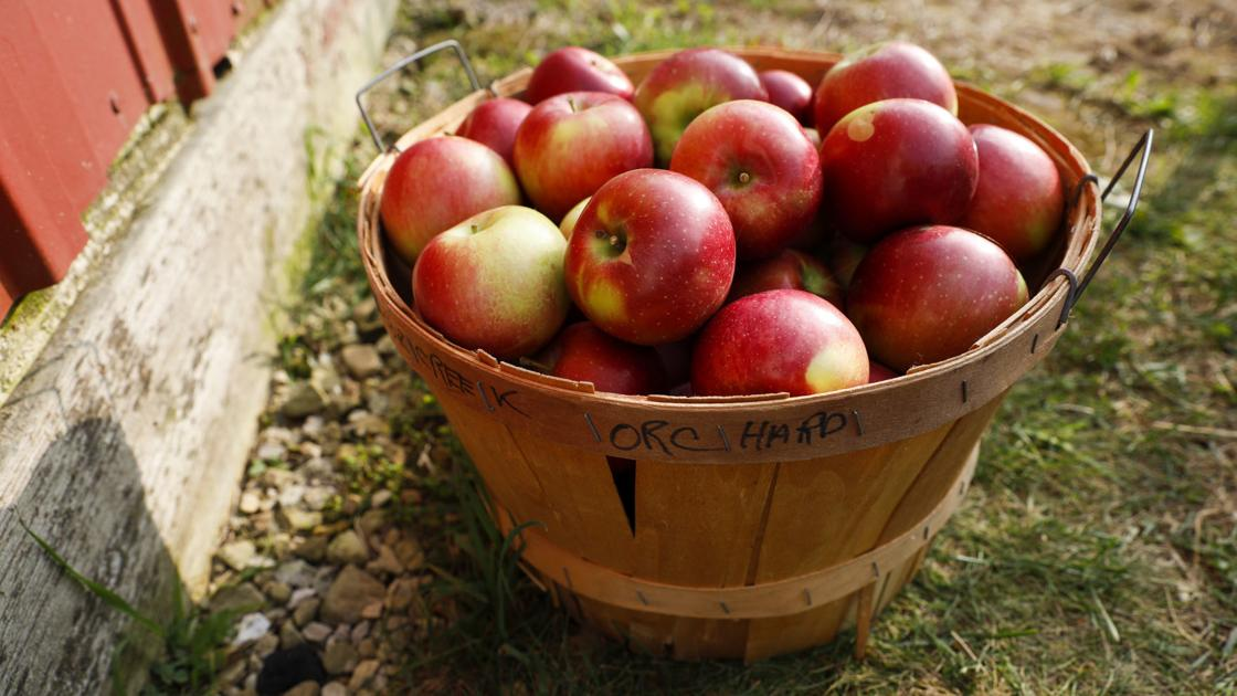 How about them apples? Pick your own, make a cocktail