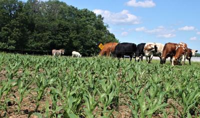 Breitenfeldt-family dairy farm
