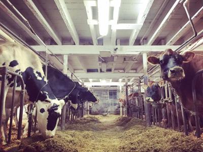 Dairy Farm (copy) (copy)