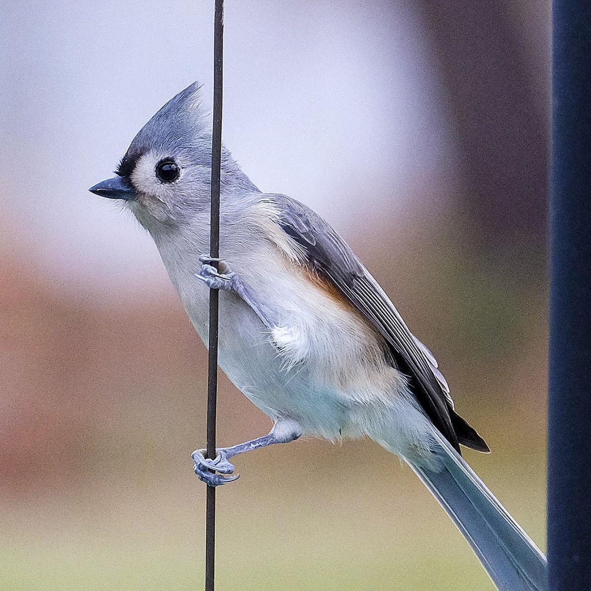 Gary Engberg Winter Bird Feeding Season Has Arrived In Wisconsin Outdoors Madison Com