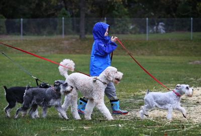 New dog park, dogs walking, State Journal photo