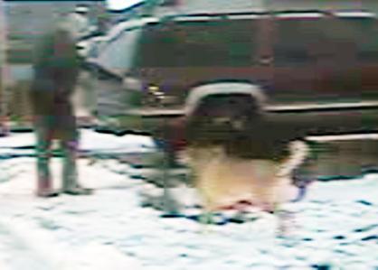 Dog Shot by Filer Police Officer