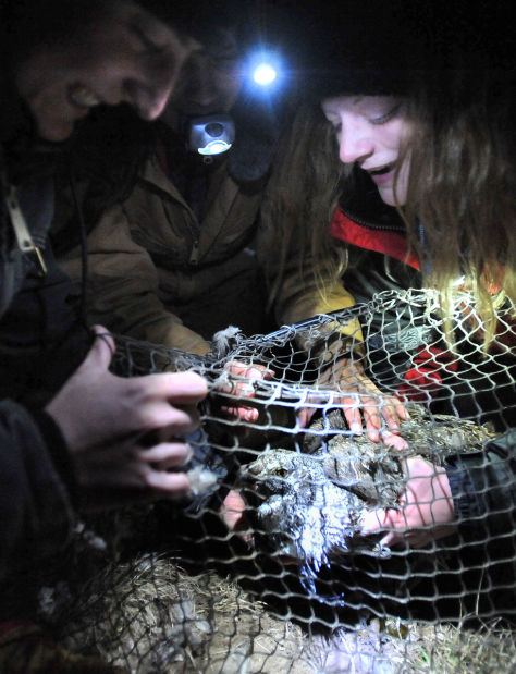 Sage Grouse Trapping