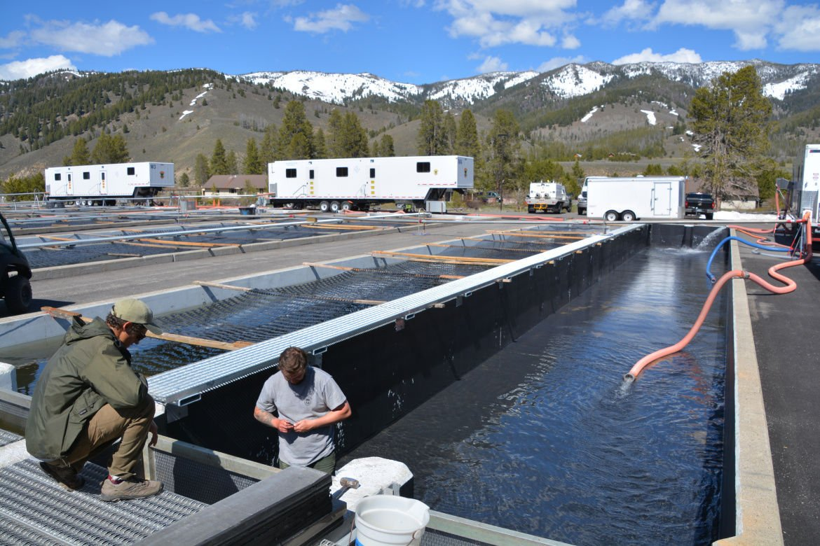 Phillips sawtooth hatchery raises mountain climbing for Idaho dept of fish and game
