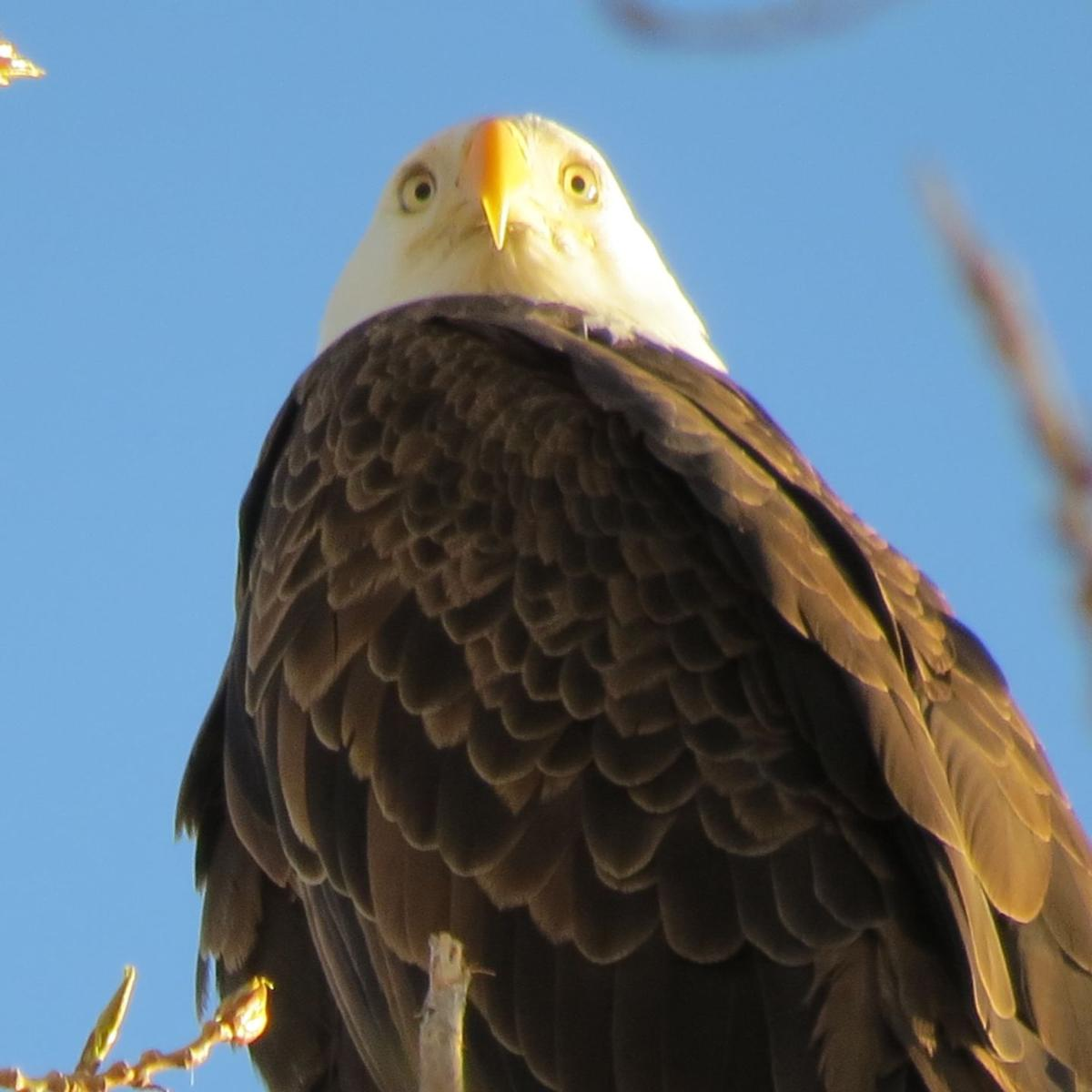 gallery birds of southern idaho outdoors and recreation