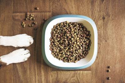 _dog-food-5168940_1920_CMYK.jpg