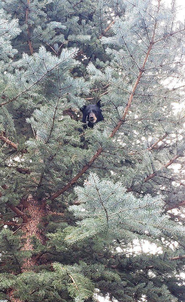 Hailey bear cub