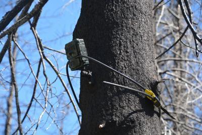 Game camera