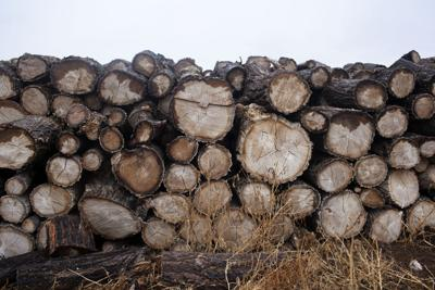 Firewood file photo