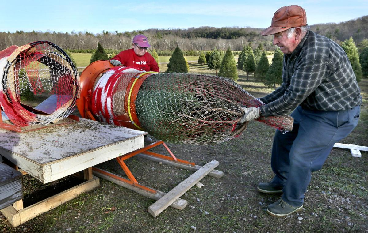 Christmas Tree Farming As Much Hobby And Business