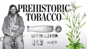Research finds Nez Perce tobacco use pre-dates trappers