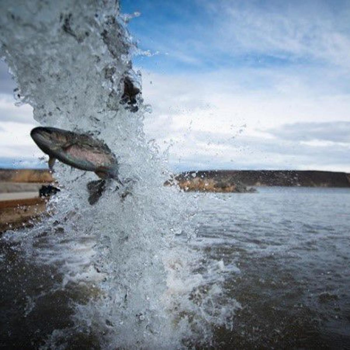 Rainbow trout stocking scheduled for Magic Valley lakes and