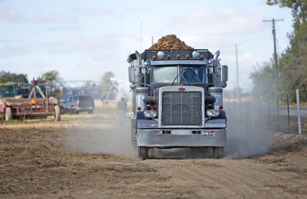suffering spuds potato harvest lags as growing season comes to an end southern idaho local. Black Bedroom Furniture Sets. Home Design Ideas