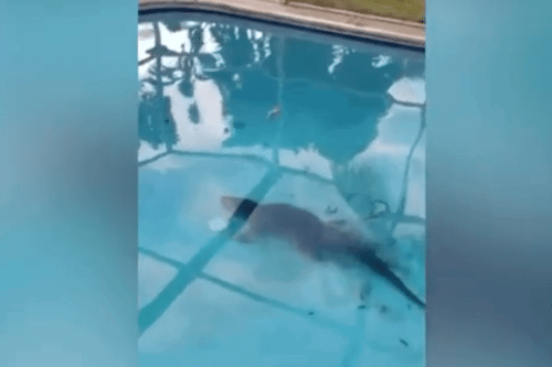 This Florida Family Found An 8-foot Alligator In Their Pool