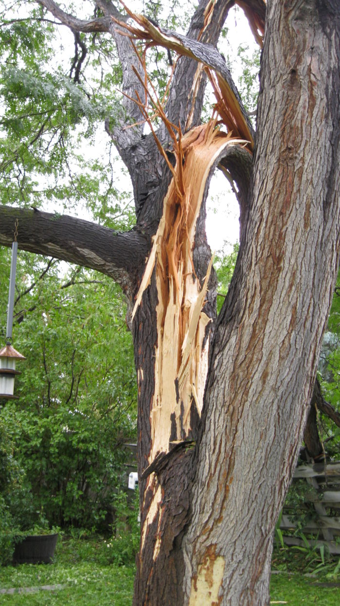 Southern Auto Parts >> Gallery: Lightning Strikes Tree in Twin Falls Backyard