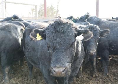 Beef scholarship