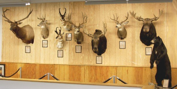 Wall Of Fame Sportsmans Warehouse Showcases Trophy Hunts
