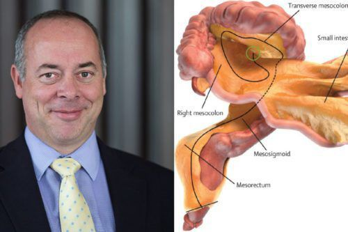 The Scientist Who Discovered A New Organ—The Mesentery—A Year Later ...
