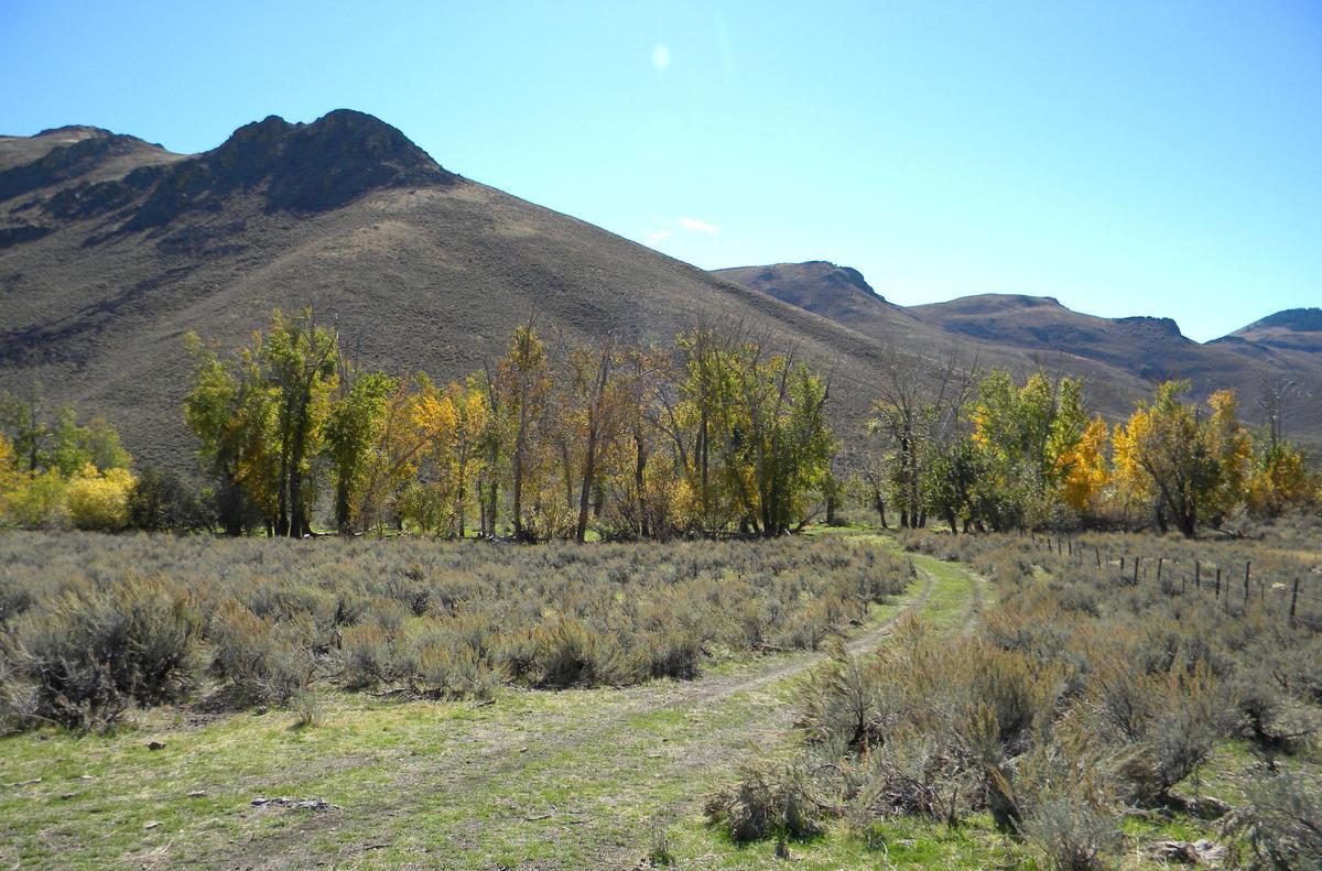 Cenarrusa Ranch