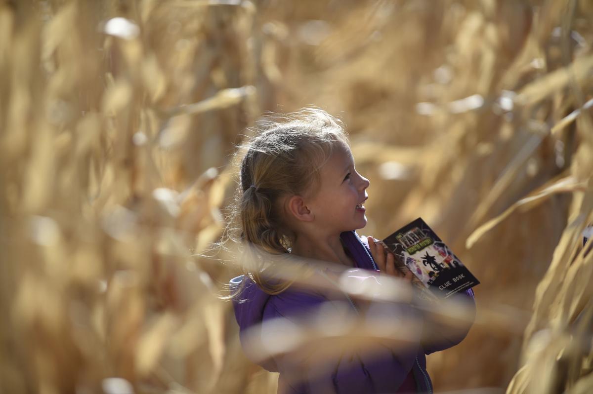 Twin Falls Corn Maze