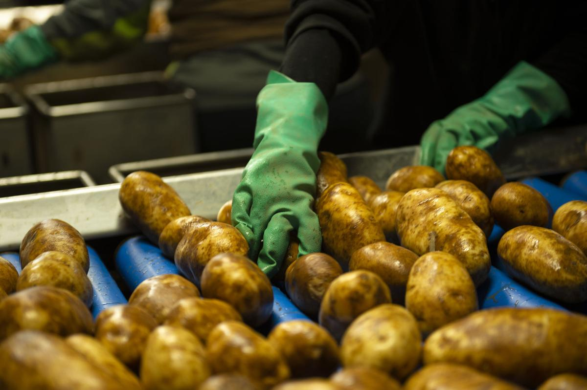 2020 a crazy but profitable year for spud farmers